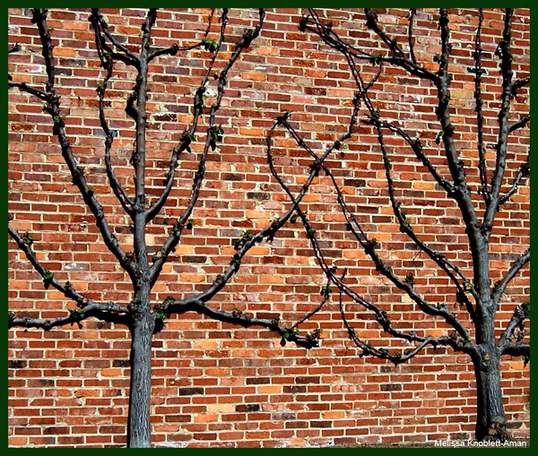 Bricks-n-Branches by Melissa Knoblett-Aman