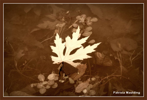 Autumn In Tones by Patricia Maulding