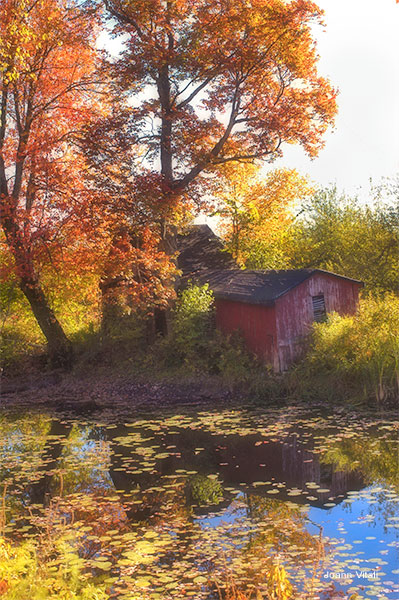 Autumn Barn by Joann Vitali