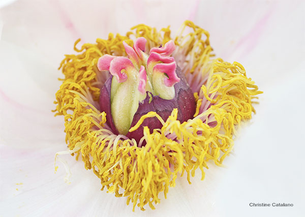 Flower´s Heart by Christine Catalano