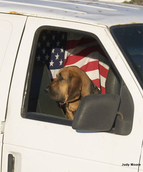 American Dog by Judy Moore