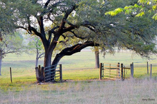 Gateway to Greener Pastures by Amy Baird