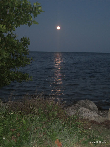 Super Moon, May 5, 2012 by Elizabeth Daigle