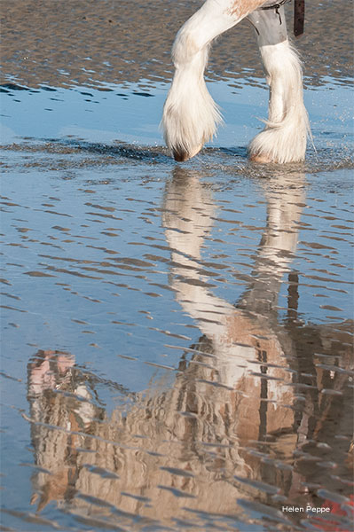 Reflect by Helen Peppe