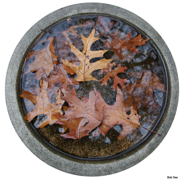 Winter Birdbath by Bob See