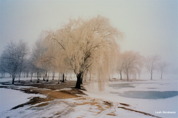 Misty Winter Morning by Leah Abrahams