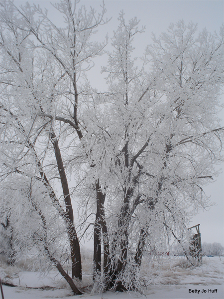 Frosty Tree by Betty Jo Huff