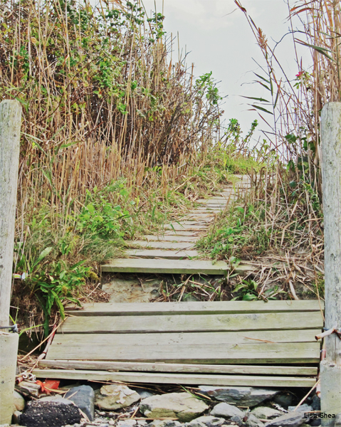 Beach Path, Interrupted by Lisa Shea