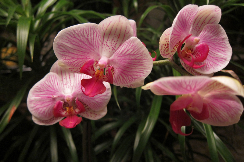 Outdoor Orchid Growing Areas