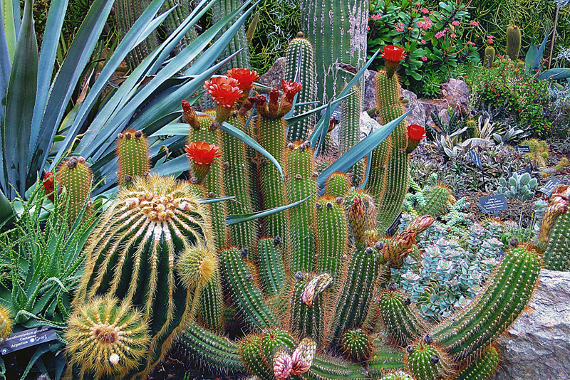 Tropical Plantings with Cacti and Succulents