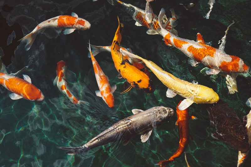 What Our Pet Fish Teach Us About Friendship