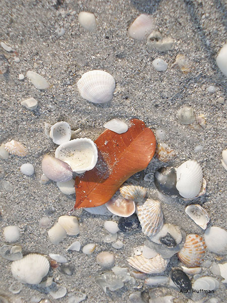 Shells and Leaf by A. J. Huffman