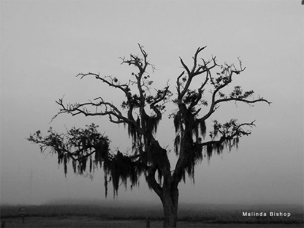 Tree Rising by Malinda Bishop