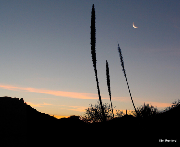 Before Sun-up in the Desert by Kim Rumford
