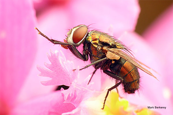Fly On Pink by Mark Berkerey